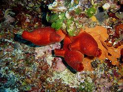 la vie sous marine 250px-15