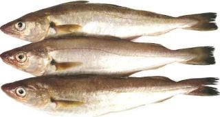 la vie des poissons - الأسماك 49165110