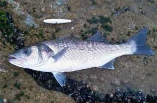la vie des poissons - الأسماك 67415811