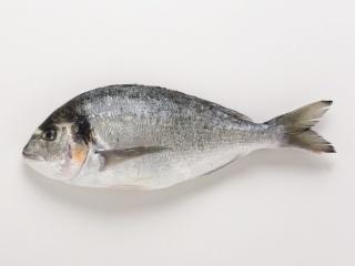 la vie des poissons - الأسماك Dur15012