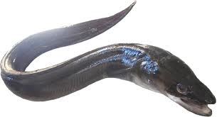 la vie des poissons - الأسماك Images38
