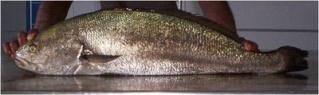 la vie des poissons - الأسماك Large_11