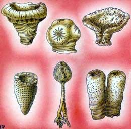 la vie sous marine Porife10