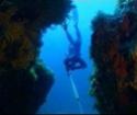 La chasse ou pêche sous-marine (CSM) 11294810