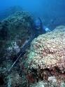La chasse ou pêche sous-marine (CSM) 11294911