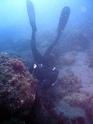 La chasse ou pêche sous-marine (CSM) 11295010