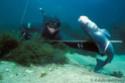 La chasse ou pêche sous-marine (CSM) Indien10