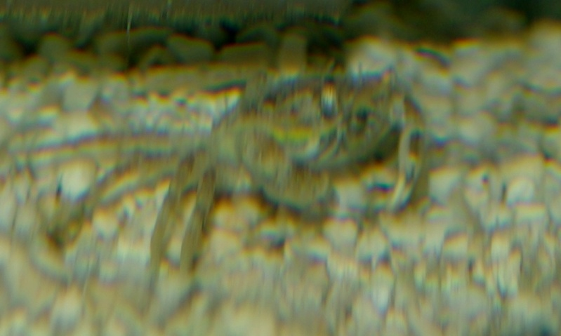 Le bac de Paul-André Evolution - Page 2 Crabe10