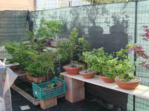 le mie piante (quasi) a posto! 1210