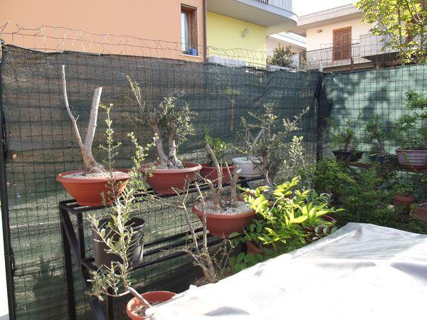 le mie piante (quasi) a posto! 1310