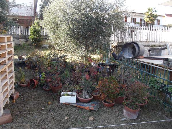 le mie piante (quasi) a posto! 310