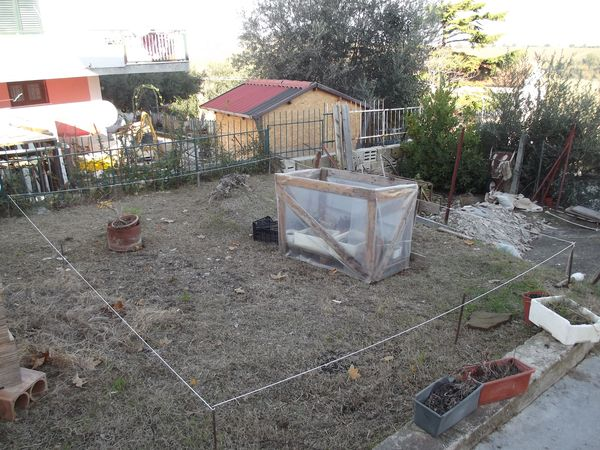 le mie piante (quasi) a posto! 411