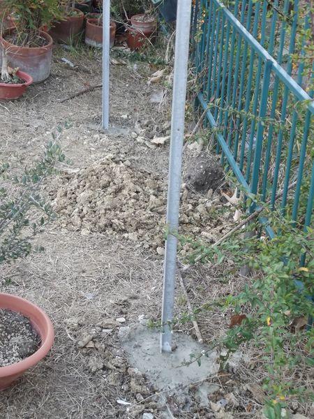 le mie piante (quasi) a posto! 610