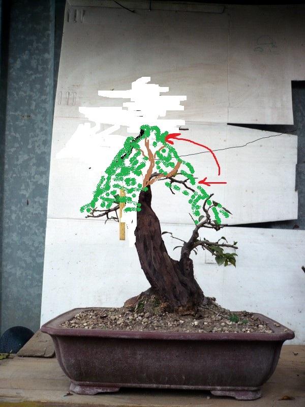 Prunus Cerasifera Mirabolano - Pagina 2 P1070111