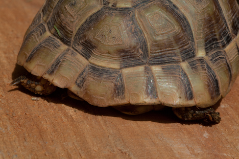 Age d'une tortue Img_8311