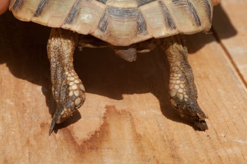 Age d'une tortue Img_8312