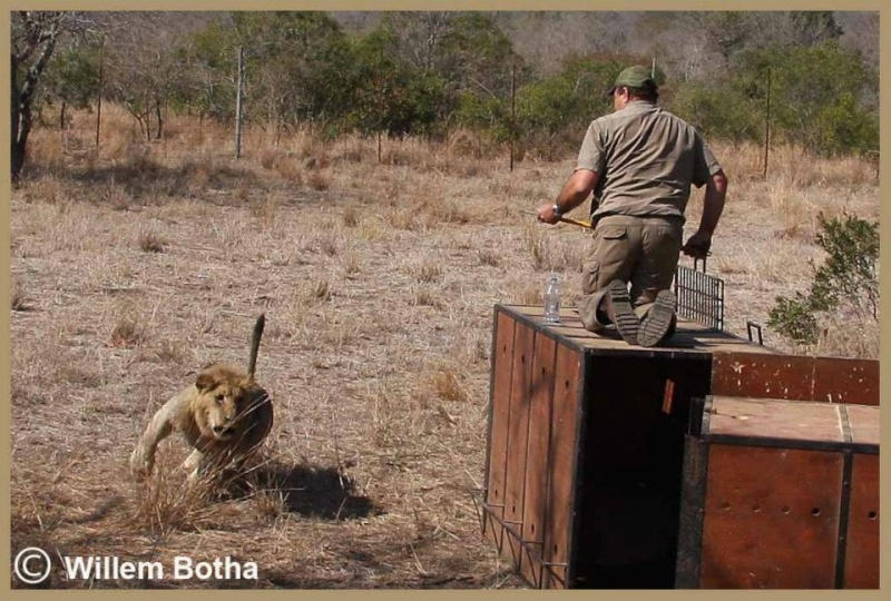 South Africa Releas10