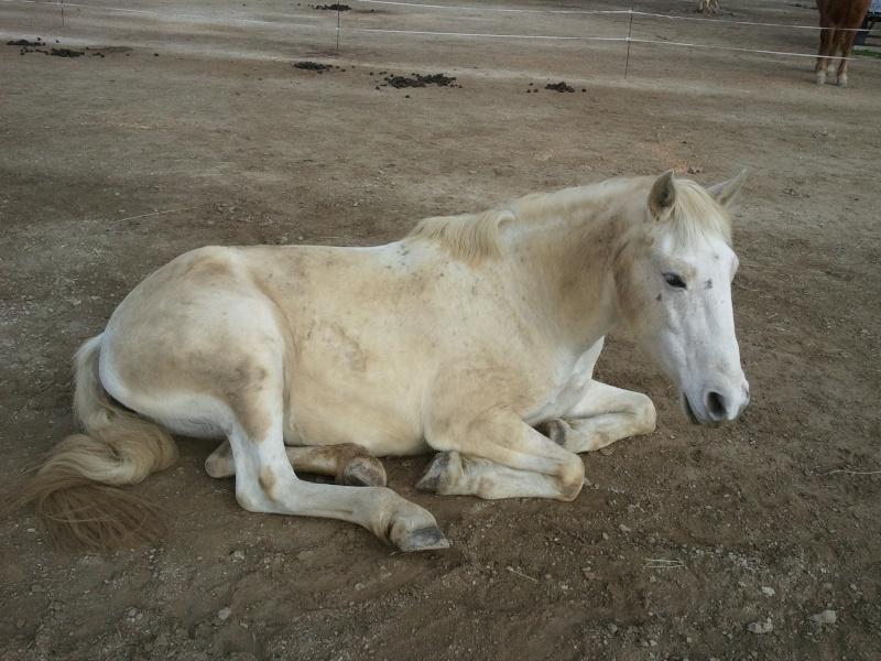 Une autre passionnée par les chevaux! - Page 2 2012-013
