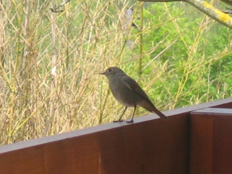quel oiseau est ce? 00511