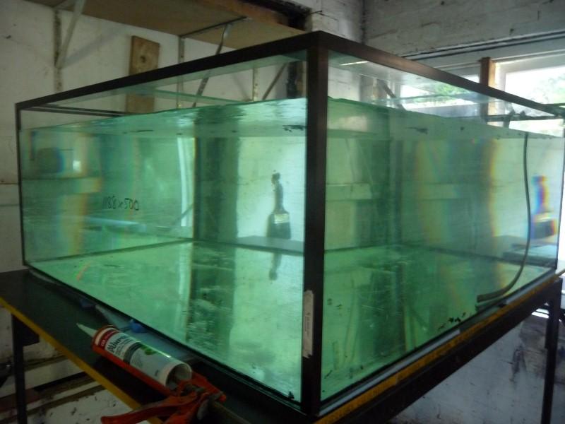 DIY Aquarium P1060410