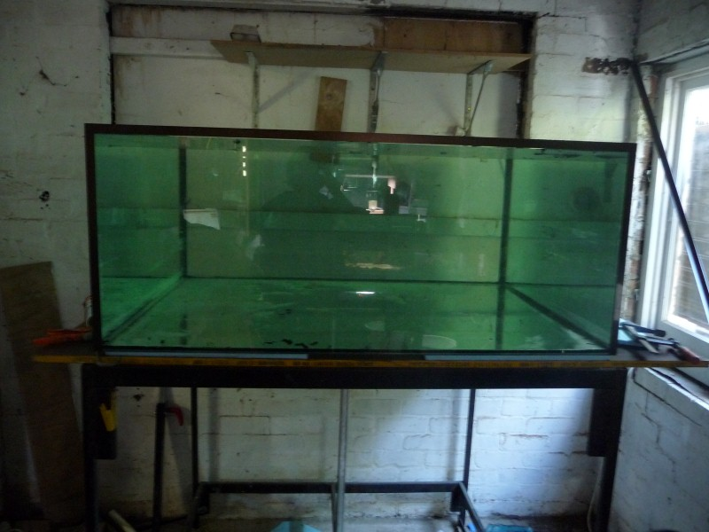 DIY Aquarium P1060411