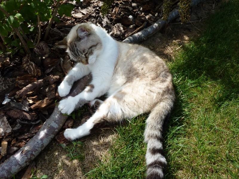 nous recherchons notre chatte Minette (pendule, médium...) P1000210