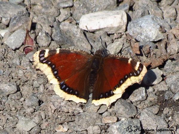 Papillon et Mouche  Papill10