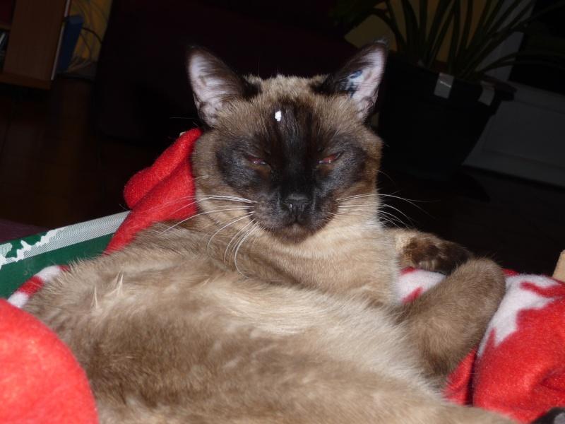 je vous en prie aider moi a rettrouver ou avoir des nouvelles de ma chatte Luna P1030511