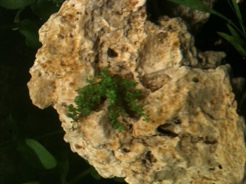 parasites ou algues ???? Photo_31