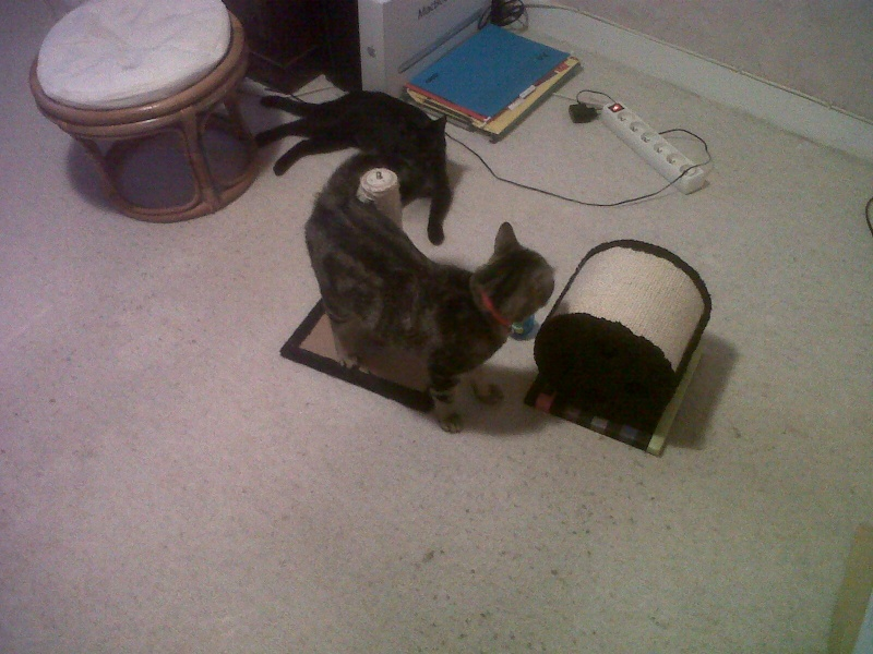 Sauvetage: Galice, chatte noire née en mai 2011 - Page 1 Ergua-11