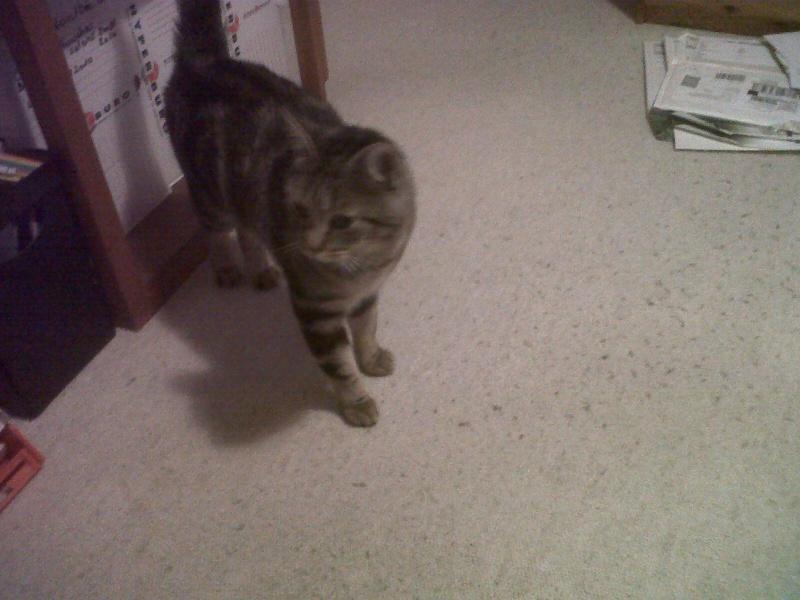 Sauvetage: Galice, chatte noire née en mai 2011 - Page 1 Quimpe10