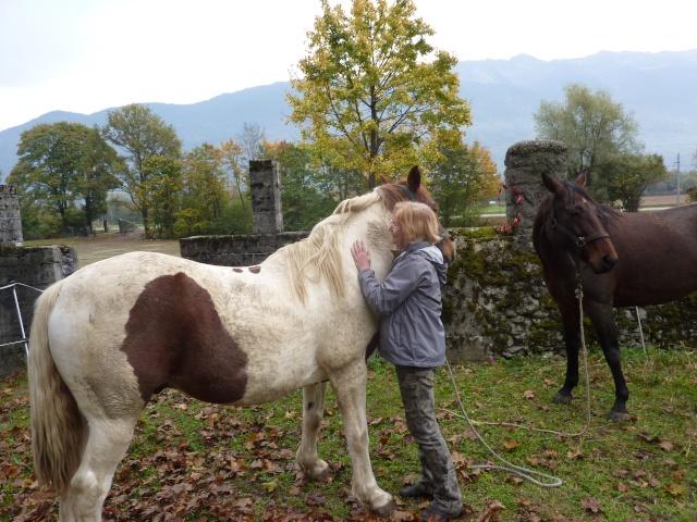 CALINOU  - ONC poney - né en 1999 - adopté en novembre 2012 par Stéphanie - Page 2 P1070910