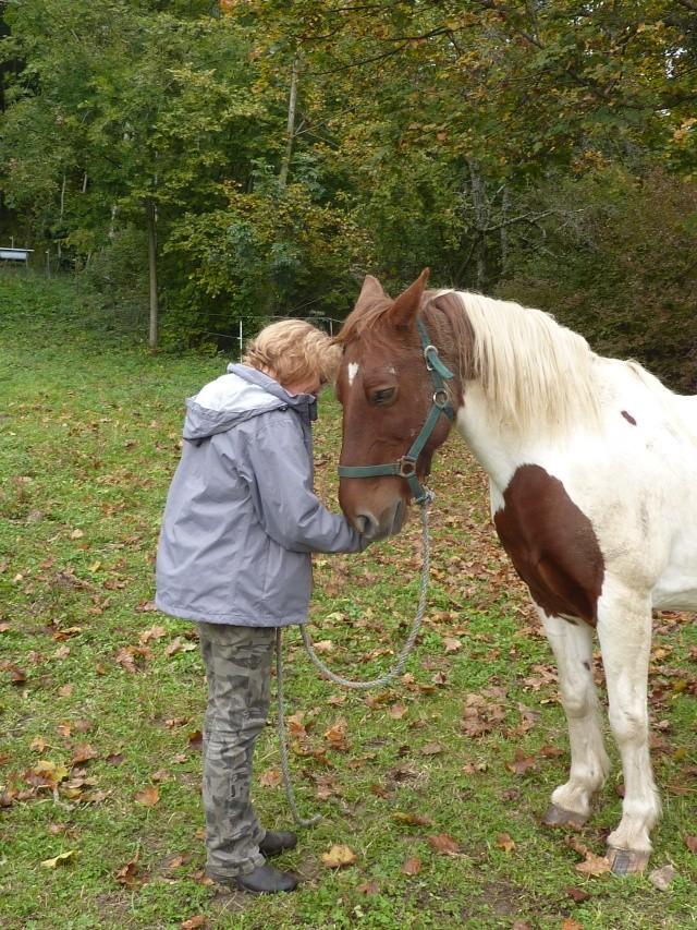 CALINOU  - ONC poney - né en 1999 - adopté en novembre 2012 par Stéphanie - Page 2 P1070911