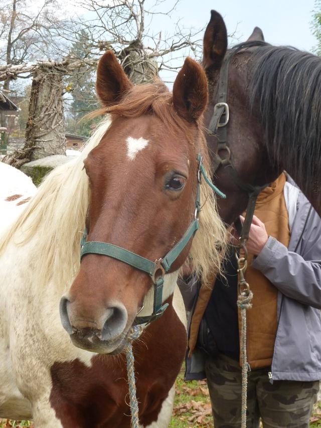 CALINOU  - ONC poney - né en 1999 - adopté en novembre 2012 par Stéphanie - Page 2 P1070912