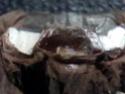 Acanthoscurria geniculata Dadadn11