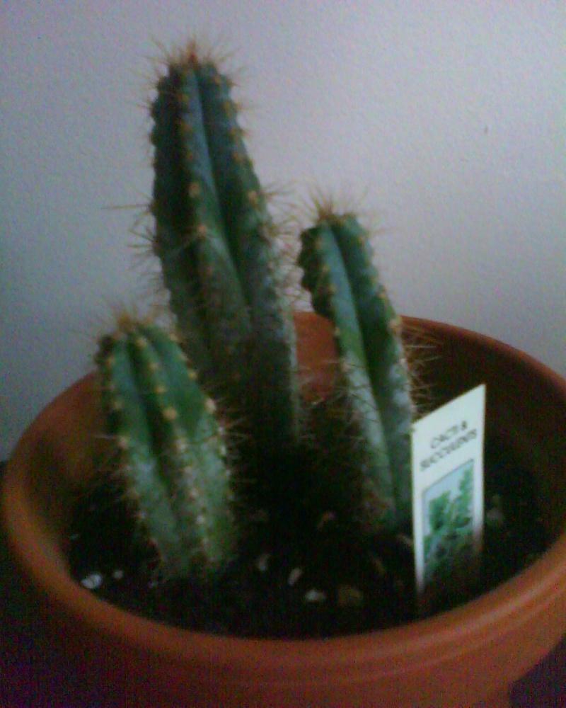 nouveau déveloplantement!!! Cactus14