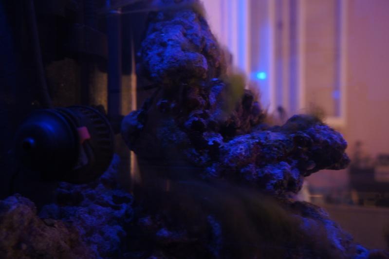 nano dennerle 60l devenue red sea Max 130D - Page 3 Dsc07511