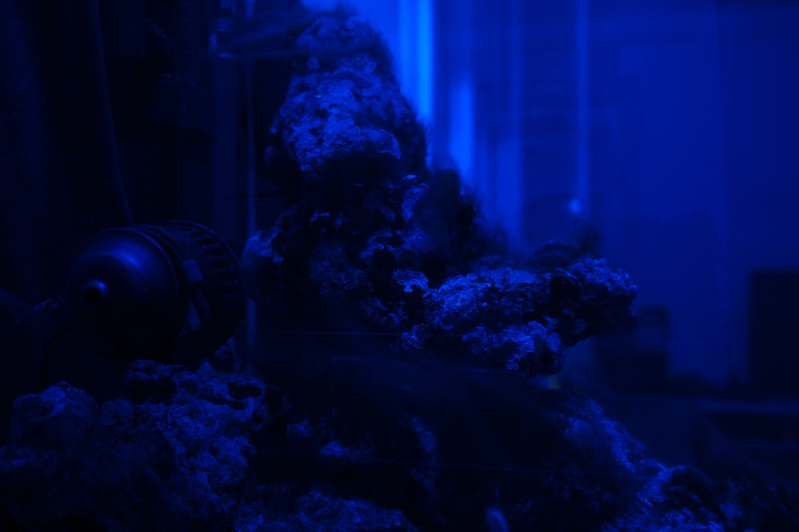nano dennerle 60l devenue red sea Max 130D - Page 3 Dsc07512
