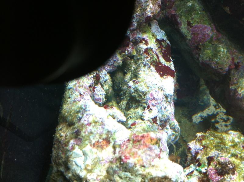 nano dennerle 60l devenue red sea Max 130D - Page 3 Img_0613