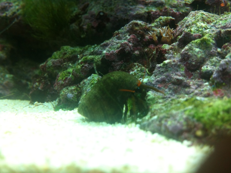 nano dennerle 60l devenue red sea Max 130D - Page 5 Img_0713