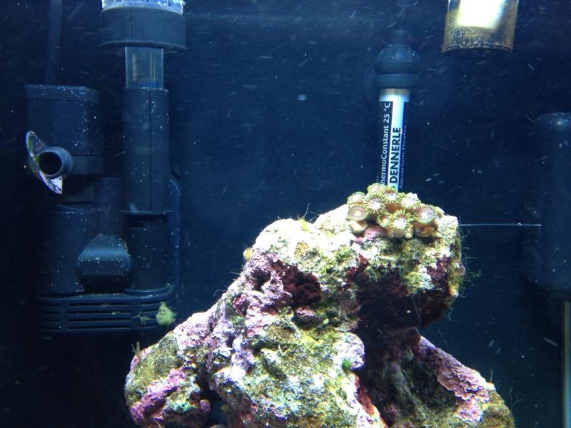 nano dennerle 60l devenue red sea Max 130D - Page 4 Photo-12