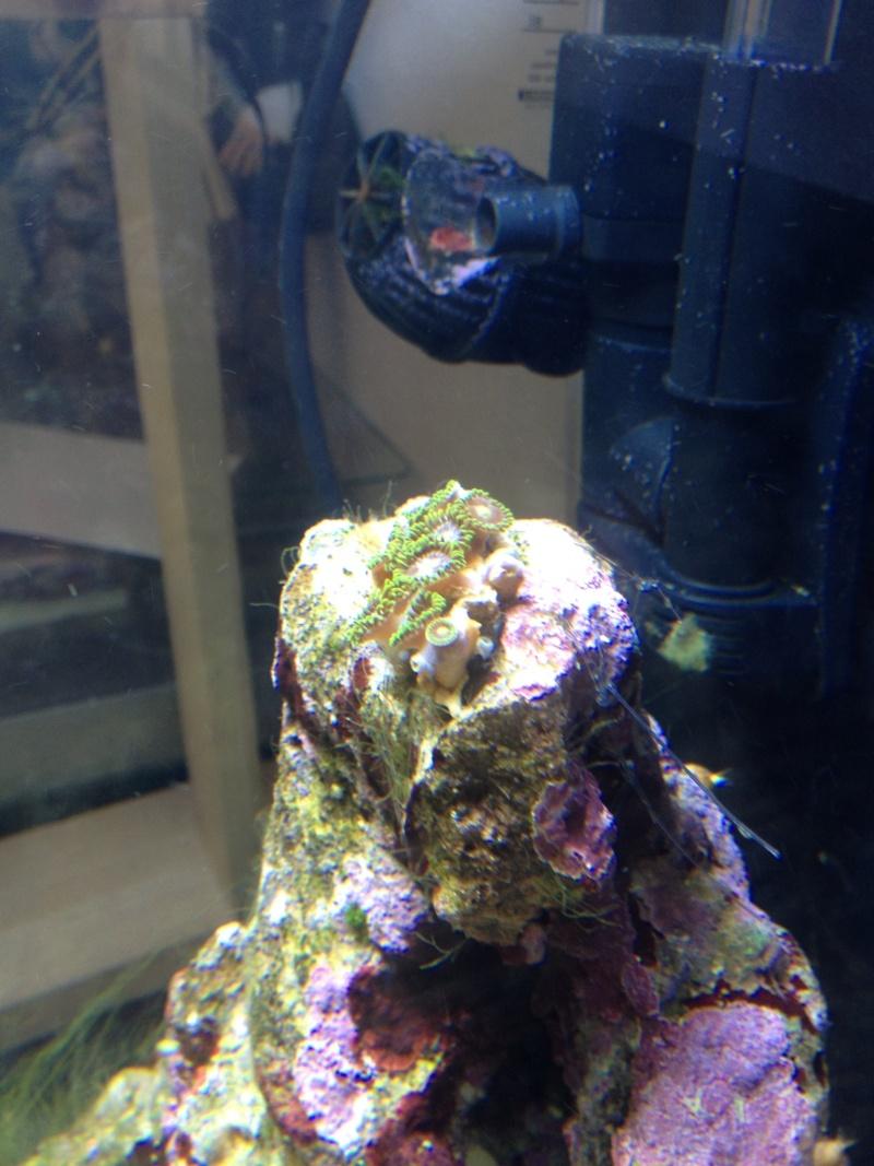 nano dennerle 60l devenue red sea Max 130D - Page 4 Photo-14