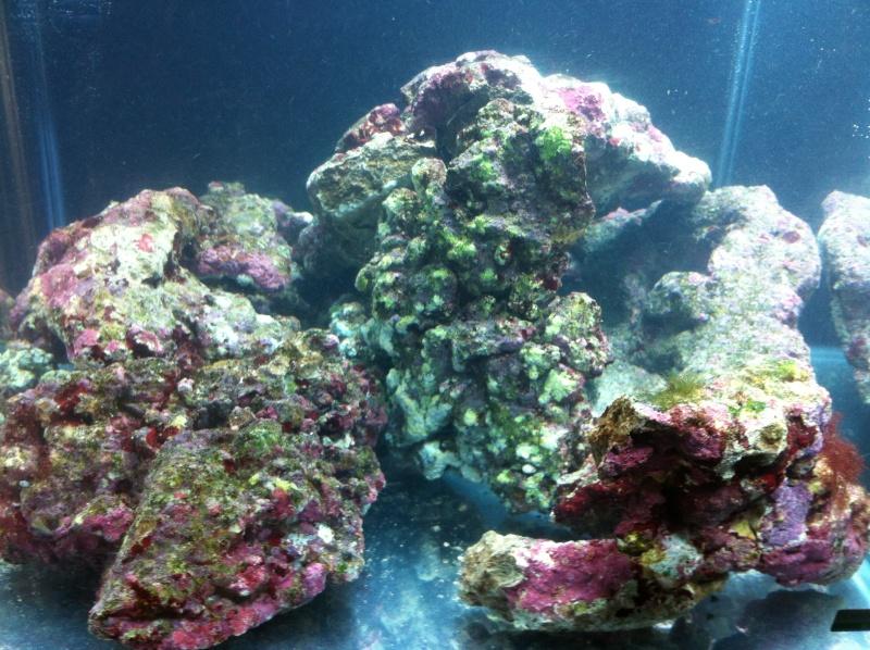 nano dennerle 60l devenue red sea Max 130D - Page 2 Photo_14