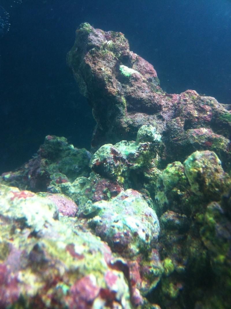 nano dennerle 60l devenue red sea Max 130D - Page 2 Photo_22