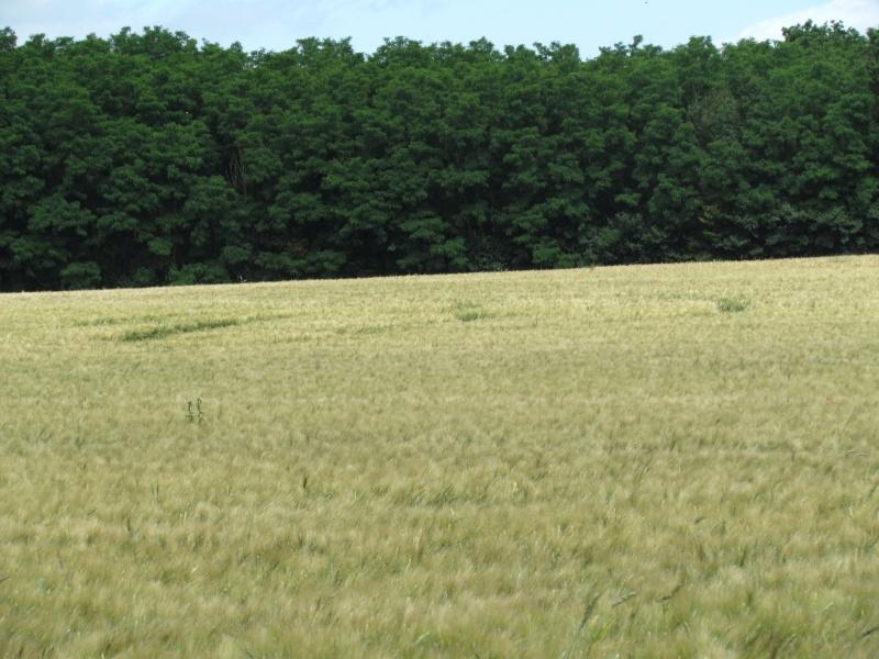 Crop à Checy (Loiret) Img_0910