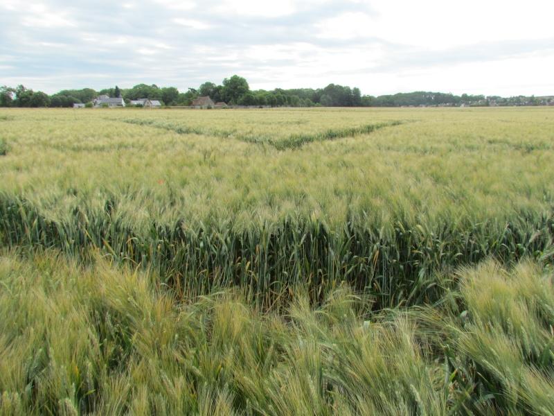 Crop à Checy (Loiret) Img_0911