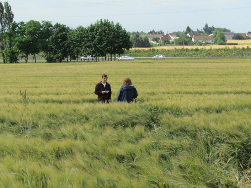 Crop à Checy (Loiret) Img_0912