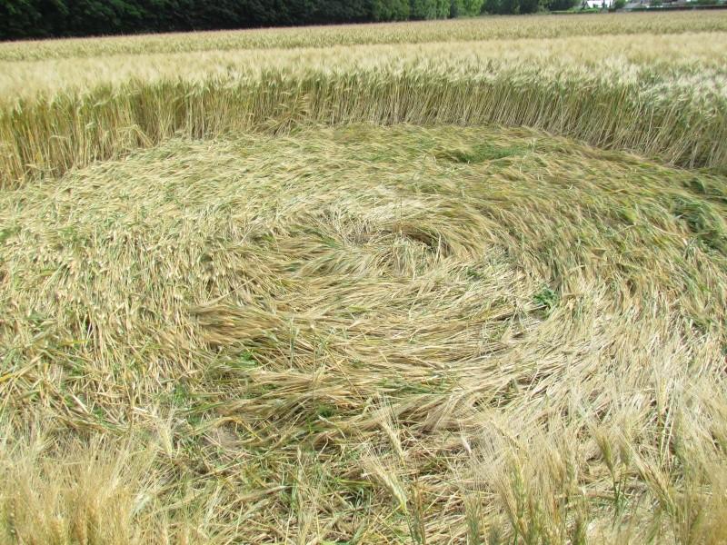 Crop à Checy (Loiret) Img_0913
