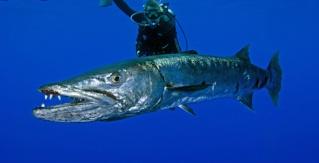 Nos amis les poissonns Prd_0110