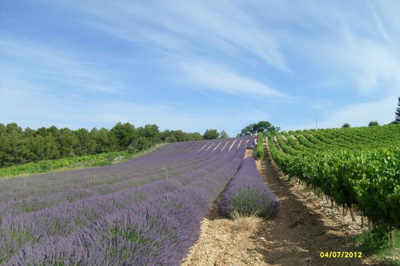 Voyage au pays des cigales, des olives, du bon vin et de la lavande S7301011